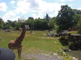le pal girafe